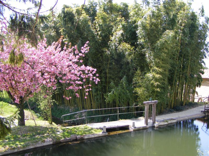La bambouseraie g te et chambres d 39 h tes s minaires le for Au jardin les amis menu